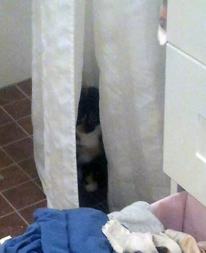 Katt i duschen