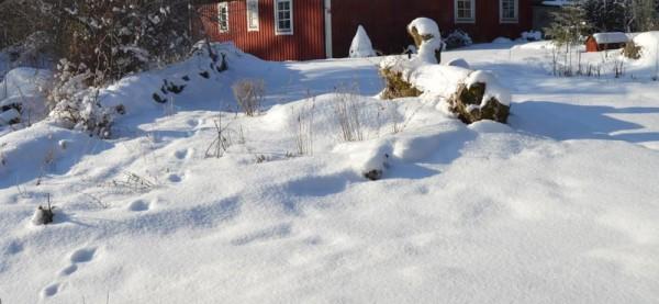 Snö i mars