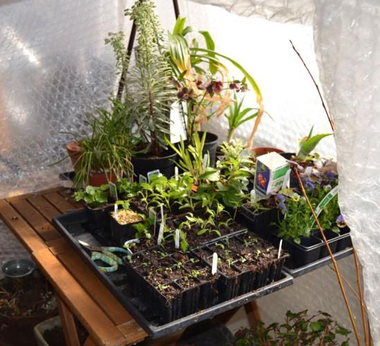 växthus i uterummet