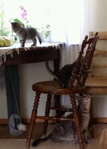 Klättrande kattungar